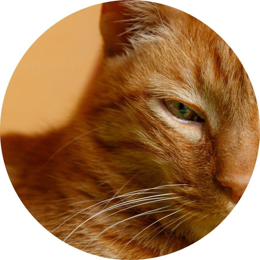 fotografia mascota