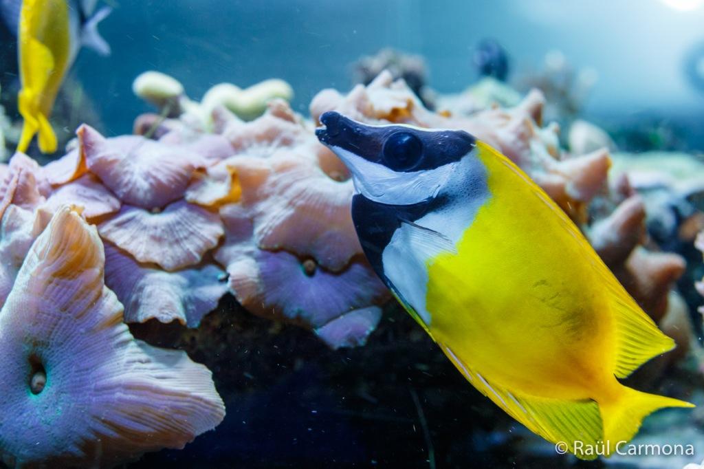 fotografia aquaris