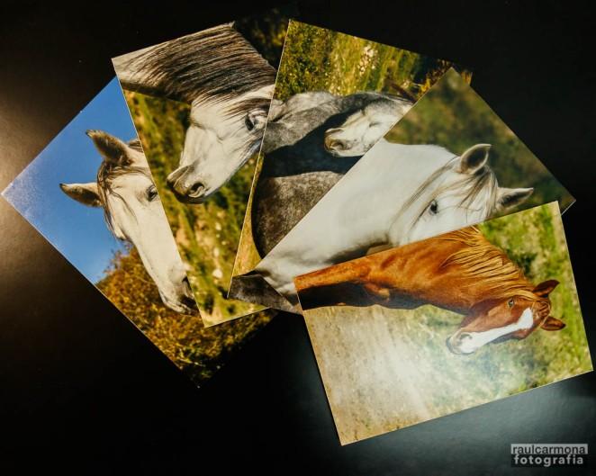fotografia cavalls cartó-ploma