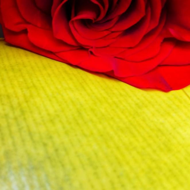 rosa, vermell, groc, llibertat, sant jordi, fotografia, camprodon